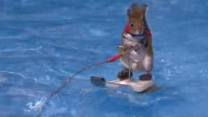 Twiggy the water-skiing squirrel entertains Toronto boat show attendees