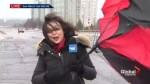 Global News Toronto reporter loses battle with umbrella on live TV