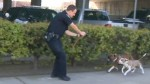 California police officer shoots pit bull after it attacked two men