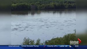 Husky Energy pipeline leaks oil into North Saskatchewan River
