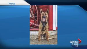 Calgary police investigating after off-duty police dog bites child