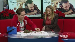 Pet of the Week: Christmas Crabs
