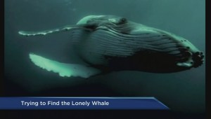 Searching for 52 Hertz, the loneliest whale