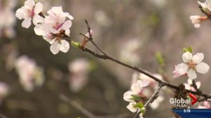 Mild winter could mean misery for spring allergy sufferers