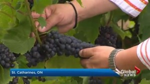 How NAFTA could affect the wine industry