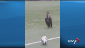 Eagle crashes North Vancouver soccer practice