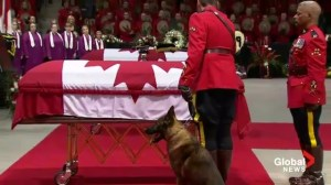Police dog of fallen mountie Dave Ross says goodbye at his casket