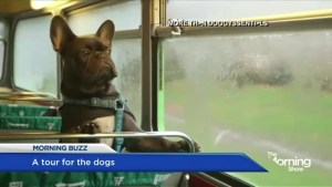 The world's first tour bus for dogs