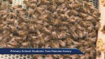 Students put Hanuka honey to the therapeutic test