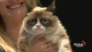 Internet sensation Grumpy Cat attends Toronto book signing