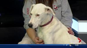 SCARS stops by with a couple dogs looking for forever homes