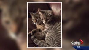Fort McMurray woman grateful to be reunited with her cats