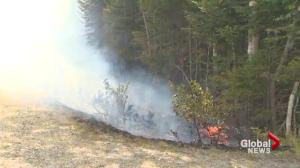 Dalhousie professor calls for better forest management following Nova Scotia wildfires