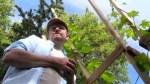 Gil Tucker : Hop Crop