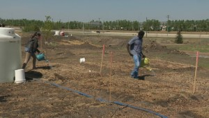 Calgary's urban farming community celebrates major milestone