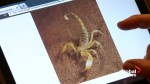 Man stung by apparent scorpion after it falls from overhead bin