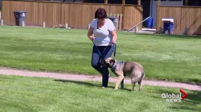 Hope Dog Rescue Saskatoon