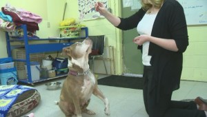 "Adopt a Pet: Jun 21     ""Darla"""