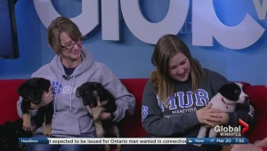 Puppies from Manitoba Underdogs looking to find a home