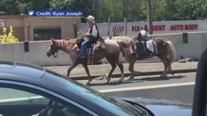 'Ride on cowboy!': Horseback rider holds up traffic on NY bridge to raise child hunger awareness