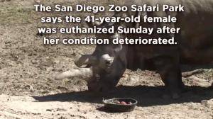Endangered white rhino dies at San Diego Zoo, leaving just 3 worldwide