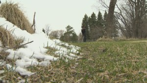 'It's beautiful': Golfers swing through falling snow on Winnipeg golf course