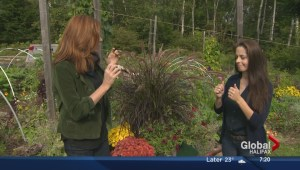 Summer to fall gardening tips