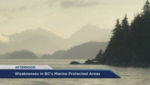 Weakness in B.C.'s marine protected areas