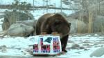 Cute zoo animals make their Super Bowl picks