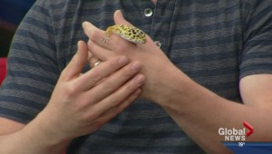 Pet of the Week: The leopard gecko