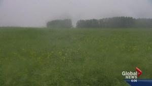 Much needed rain falls in Saskatchewan