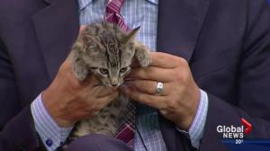 Pet of the Week: Chico