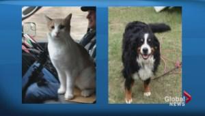 Cranbrook dog and cat make incredible journey