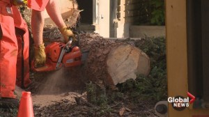 Calgary crews cleanup after wild storm
