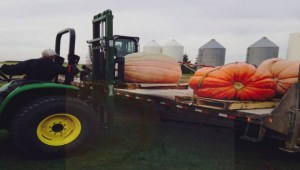 Better Winnipeg: Giant pumpkins serve a greater purpose on Halloween