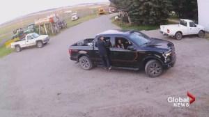 Alberta farm employee escapes gunfire as thieves flee with stolen property