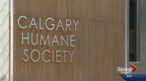 Three charged in death of injured dog found wandering in Calgary