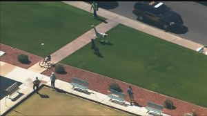 Llamas on the run in Phoenix get caught
