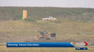 Dead horses found at landfill 'shocks' Calgary woman