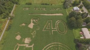 New Brunswick farmers build corn maze in shape of iconic Jose Bautista bat flip