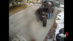 Calgary tire thieves caught on camera