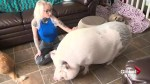 Lethbridge woman credits pig with saving her life: 'Either I get a pig or I'm going to die'