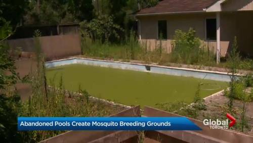 Backyard swimming pool in mississauga turns into mosquito for Pool show mississauga