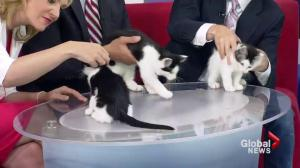 Adopt a Pet: A trio of kittens