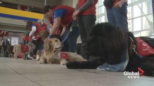 YYC welcomes furry friends to fight flying jitters
