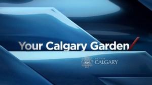 Your Calgary Garden: Aug 23