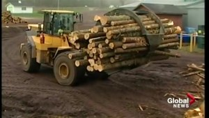 New Brunswick seeking continued exemption from duties on lumber exports to U.S.