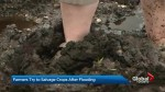Ontario farmers trying to salvage crops after flooding