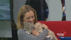 Pet of the Week: Chester and Sylus