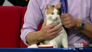 Edmonton Humane Society: Friendly Giant & Cindy-Lou